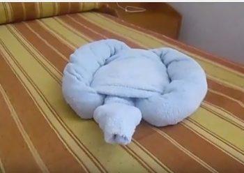 Come fare una tartaruga con gli asciugamani.